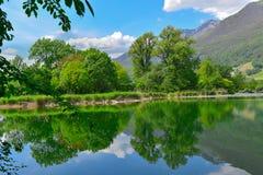 湖在沼泽在春天 免版税库存照片