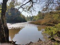 湖在清早阳光下 库存照片