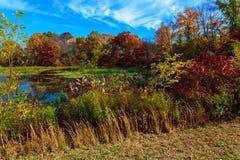 湖在游泳下的秋天森林里由云彩 免版税库存图片