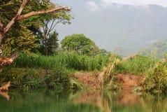 湖在热带森林里 免版税库存图片
