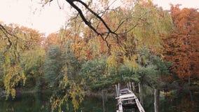 湖在秋天森林里 股票视频