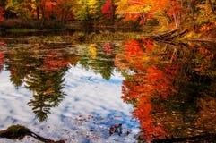 湖在秋天森林里 图库摄影