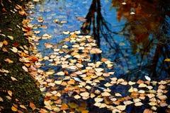 湖在秋天 免版税库存图片