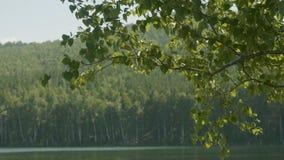 湖在那里前景的森林是树分支  树枝在前景湖 免版税库存图片