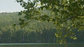 湖在那里前景的森林是树分支  树枝在前景湖 免版税库存照片