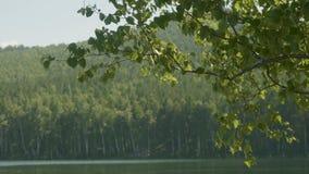 湖在那里前景的森林是树分支  树枝在前景湖 库存照片