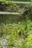 湖在雨天 库存照片