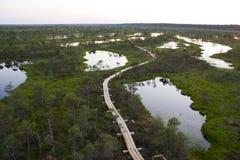 湖在Kemeri沼泽在拉脱维亚 免版税库存图片