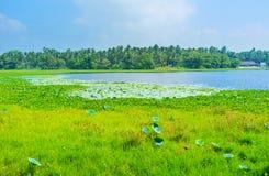 湖在Madampe 库存图片
