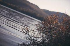 湖在Québec 库存照片