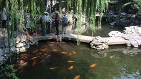 湖在Yu庭院在上海,中国 影视素材