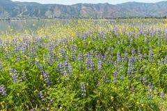湖埃尔西诺海岸线远景春天 免版税库存照片
