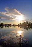 湖天鹅 库存照片