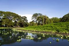 湖尼加拉瓜海岸线美妙的风景  免版税图库摄影