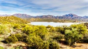湖山围拢的巴特利特和许多柱仙人掌和其他仙人掌在亚利桑那的沙漠风景 库存图片
