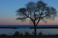 湖岸多伦多 库存图片
