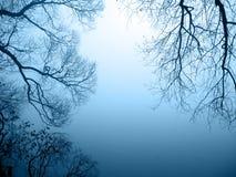 湖岸有薄雾 库存照片