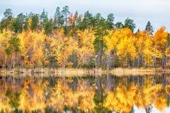 湖岸的秋天金黄森林  免版税图库摄影