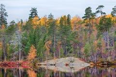 湖岸的秋天金黄森林  免版税库存照片