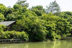 湖岸 免版税库存图片