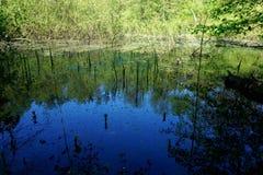 湖或池塘的镇静水 欧洲风景 免版税库存照片