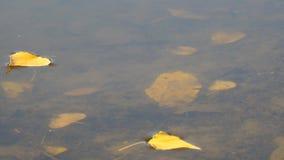 湖或河的表面上的秋叶 影视素材
