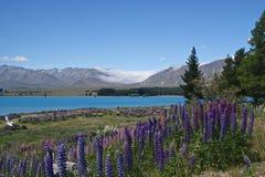 湖新的tekapo西兰 免版税库存图片