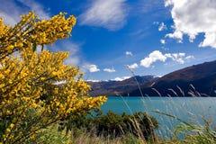 湖新的wanaka西兰 免版税库存照片