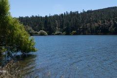湖有树和草的罗伯特海岸线 免版税图库摄影