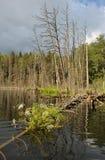 湖木头 库存照片