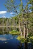 湖木头 图库摄影