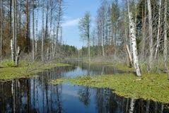 湖木头 免版税库存图片