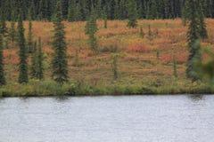 湖树和草甸 免版税库存图片