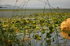 湖植被 库存图片