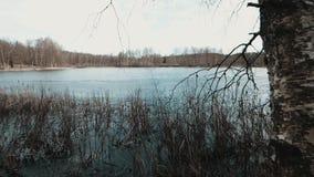 湖每美好的早期的春日 股票视频