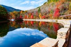 湖水和秋天树风景 图库摄影