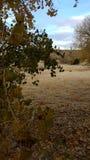 湖沙子秋天内布拉斯加海湾晃动树 库存照片