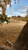 湖沙子秋天内布拉斯加海湾晃动树 免版税图库摄影