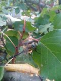 湖河旅游业动物蜻蜓昆虫 库存图片