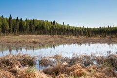 湖沼泽 免版税图库摄影
