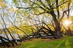 湖海斯的湖边 免版税图库摄影