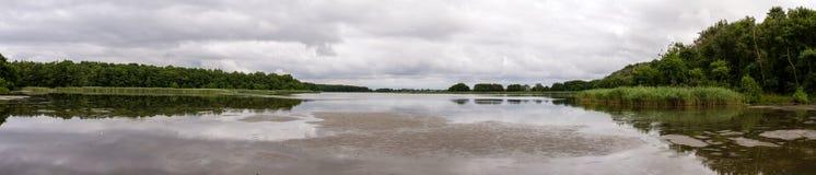湖海鸥的全景在Curonian唾液的 免版税图库摄影