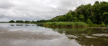 湖海鸥的全景在Curonian唾液的 图库摄影
