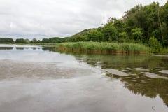 湖海鸥的全景在Curonian唾液的 免版税库存照片