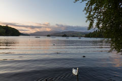湖温德米尔平静的黄昏场面有一只疣鼻天鹅的在前面 免版税库存图片