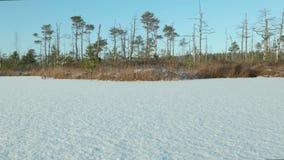 冻湖的冬天森林 干净和冷淡的白天 光滑的移动式摄影车射击 影视素材