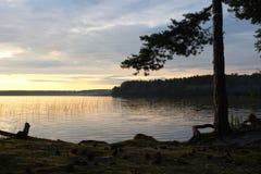 湖的岸的杉木森林 免版税库存照片