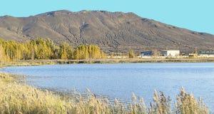 湖的岸的植物 免版税库存照片