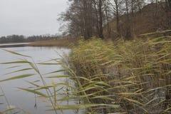 湖的岸的里德 库存照片