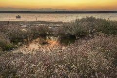 湖的岸,日落在水,在岸的可爱的花中反射了 免版税库存照片
